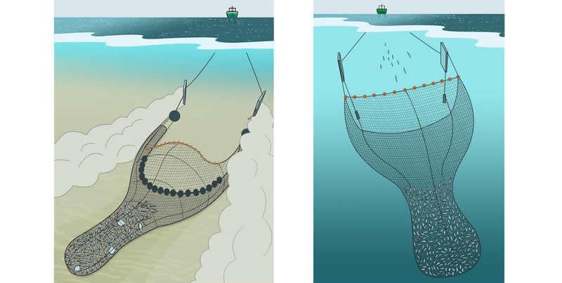 Denardo Seafood - Fischhandel Mollusken Krustentiere ... Fallen